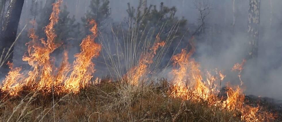 Gräsbränder är vanliga i torra marker
