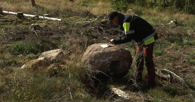 Ensidigt skogsbruk – en orsak bakom rekordangreppen