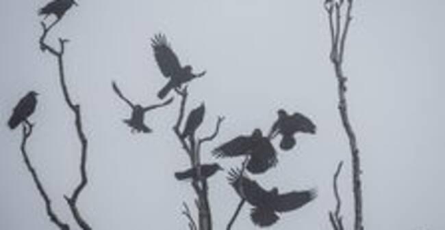 Ny forskning: Därför ärvissafåglarlika smarta som däggdjur