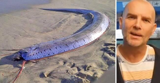 Titta, Brugden är inte ensam – här är tre andra havsbjässar som hittats i svenska vatten