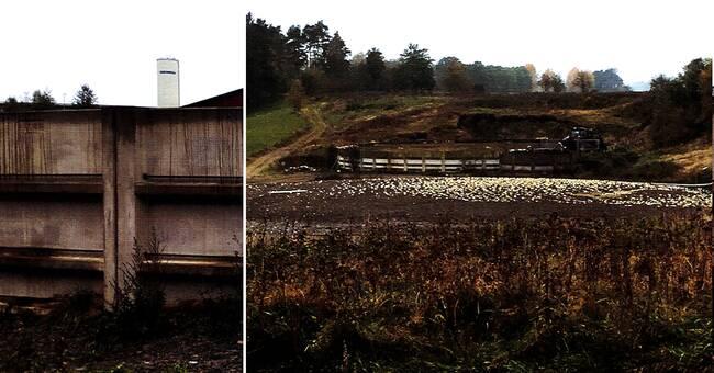 Gård riskerar 50000 i vite för överfulla gödselbrunnar