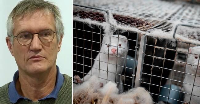Anders Tegnell: Muterad minksmitta har inte hittats i Sverige