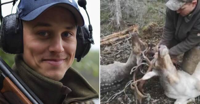 Här räddar Felix två dovhjortar – som fastnat i varandra