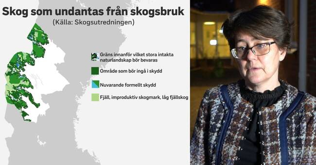 Skogsutredningen: 284000 hektar skog i Jämtlands län undantas från skogsbruk