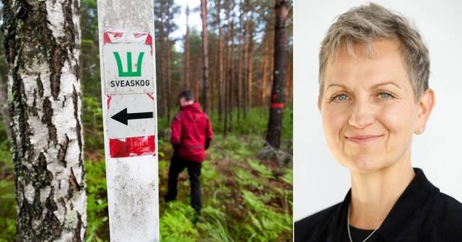 Sveaskogs vd slutar genast: Sätta ner foten