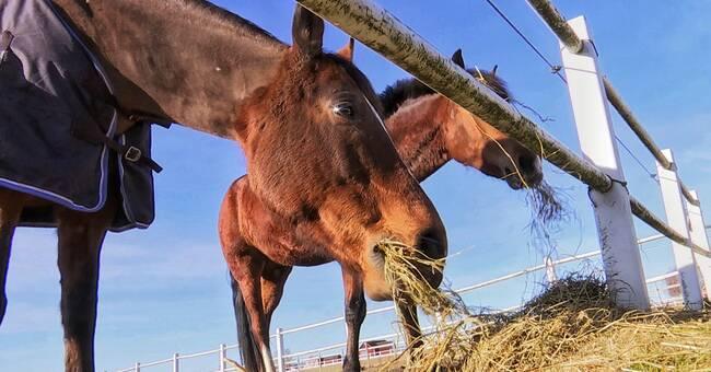 Hästar som byter hage måste registreras om