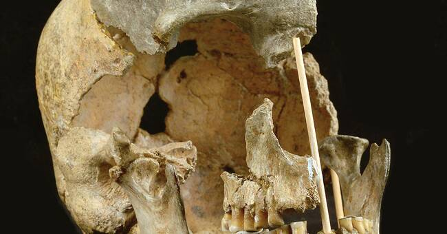 Tre frågor om: Homo sapiens och neandertalare kan ha fått barn oftare än man trott