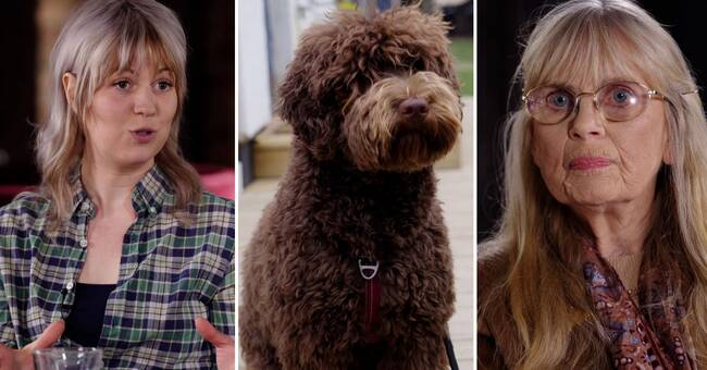 """Hård debatt om blandrashundar: """"Förstör de riktiga raserna"""""""