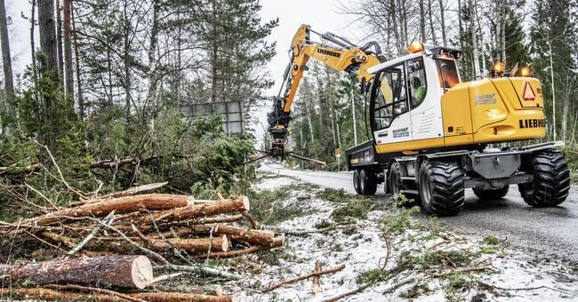 Skogsstyrelsen gör fältbesök på var 20:e avverkningsanmälan