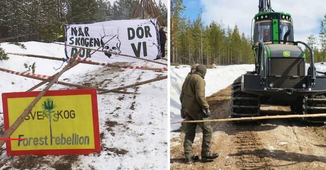 Så blev skogen i norr en av årets mest konfliktfyllda frågor