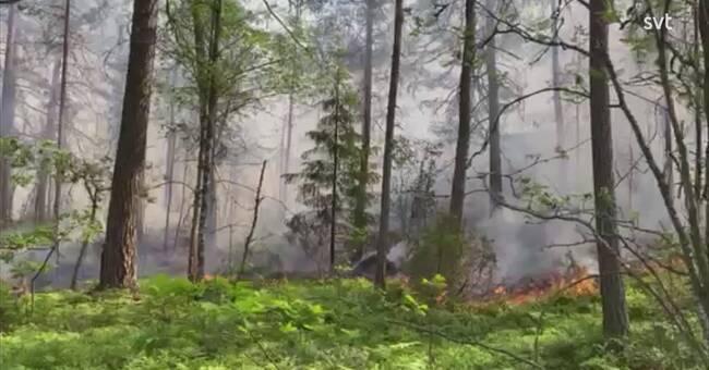 Flera bränder i Vrinneviskogen i Norrköping