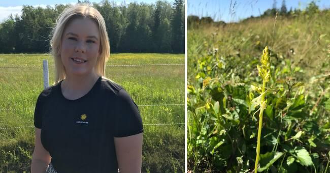40 mil vägkanter undersöks i Karlstad – ska ge en överblick av växtarter