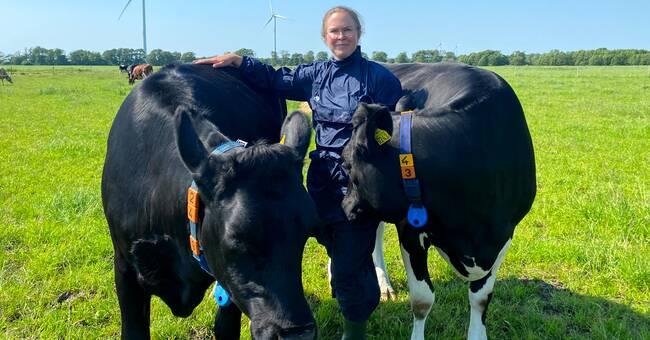 Akut veterinärbrist tvingar praktik i Varberg att stänga jourverksamheten