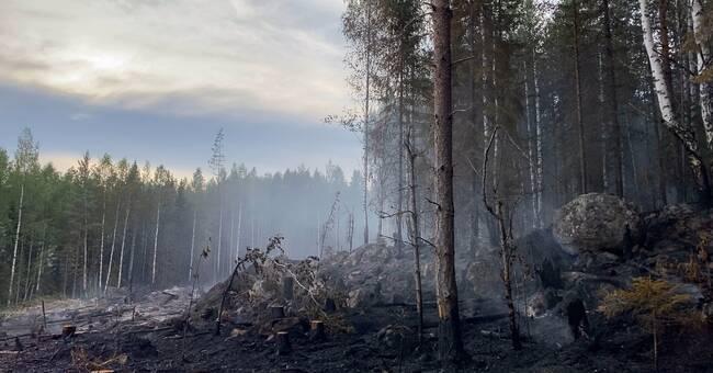 Brand på ö vid Mensträsk utanför Norsjö