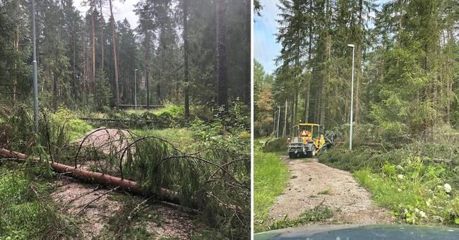 Köpings kommun varnar för nedblåsta träd – kommer ta tid att röja upp