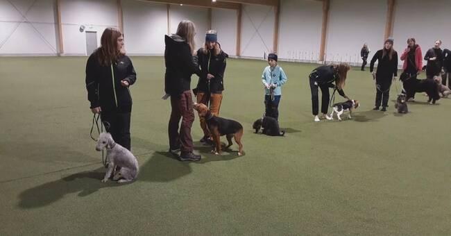 Träningshall för hundar har öppnat i Skellefteå