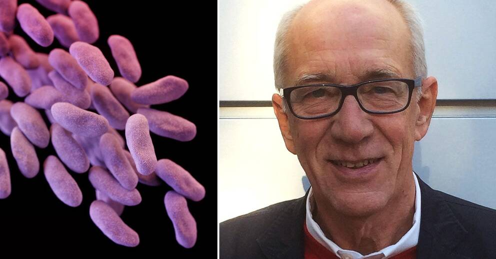 resistenta bakterier i urinen smitta
