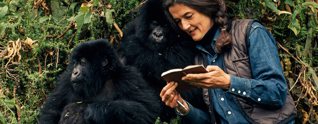 Dian Fossey.