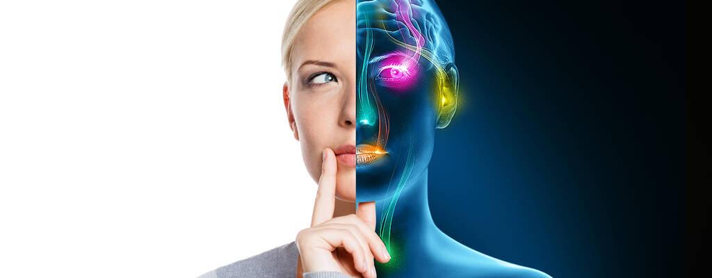 Hur fungerar våra sinnen?