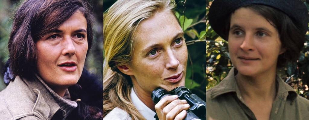 Dian Fossey, Jane Goodall och Birute Galdikas.