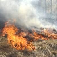 Fjolårsgräset brinner bra!