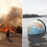 Bränder i Kalifornien, en jordglob i vatten och kött.