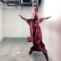 Vildssvin, slaktat