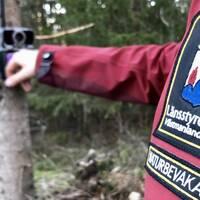 Länsstyrelsen i Västmanland övervakar vargstammens utbredning och utveckling