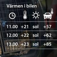En solig men inte speciellt varm dag kan det bli över 80 grader varmt i bil med uppvevade fönster.
