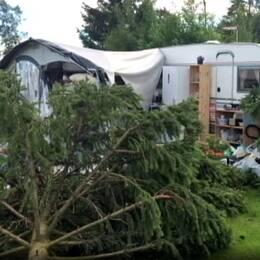 En bild på trädet som föll över tältet. Till höger Madléne.