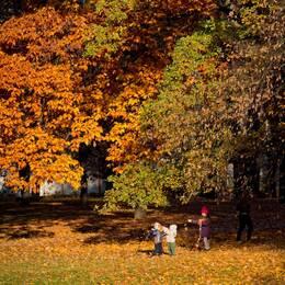 Barn leker med höstlöv i park