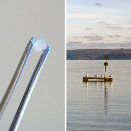 Montage av bilder på en and, mikroplast och sjövatten.