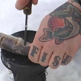 Hand med tatueringen fish på fingrarna