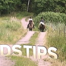 Tre bästa tips inför din tur på hästen.