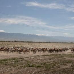 I utkanten av den kazakstanska stäppen börjar nya Sidenvägen.