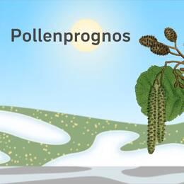 Pollenprognos