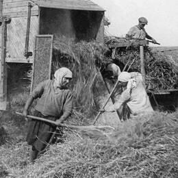 Höskörd i Sovjetunionen 1937.