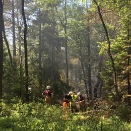 Brandmän i skogen