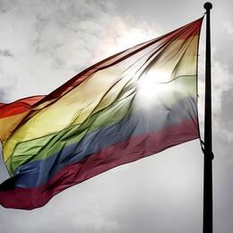 Regnbågsflaggan vajar i vinden