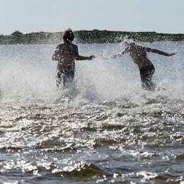 Personer som springer ner i havet.