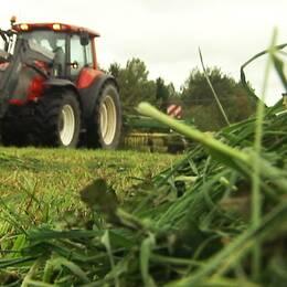 Just nu är det många lantbrukare i Värmland som pressar gräset från årets sista skörd
