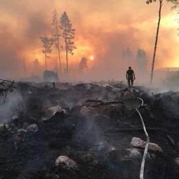 Hemvärnssoldat i motljus går över rykande hygge i samband med skogsbränderna sommaren 2018