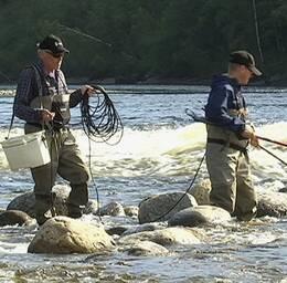 Sjukdomar och dålig reproduktion är orsaken till det totala stoppet för lax- och öringsfiske i Ljungan nästa år.