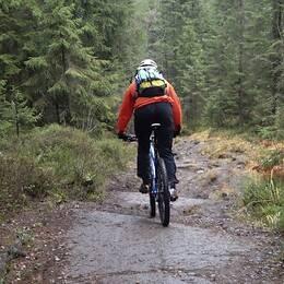 mtb-cyklist påskogsstig, samt nära bild springande renar