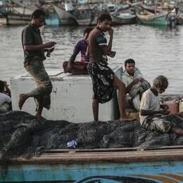 Fiskare i al-Hudaydah, Jemen. Arkivbild.