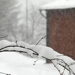Hus i Nordingrå