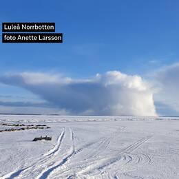 Vinnare vecka 14: Anette Larsson