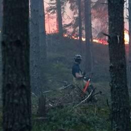 brandman bekämpar skogsbrand godegård norr om Motala
