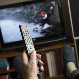 SVT:s vd Eva Hamilton tycker att det är orättvist om det framöver bara är äldre personer som betalar tv-avgiften.