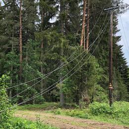 Delar av elnätet i Nybro kommun har skadats efter nattens oväder som fällde flera träd över ledningar.